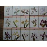 Lote C/15 Cartões Postais Temáticos-orquídeas Brasileiras