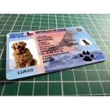 Carnet Para Mascota Editable (psd) / Plantilla Original