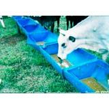 Cocho Pra Animais 6 Unidades Capacidade 25 Litros Por Unidad