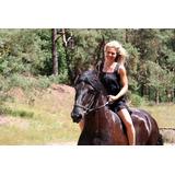 7 Años De Edad, Frisian Horse En Venta Ahora