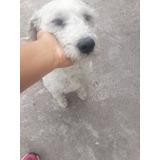 Adopción De Perro