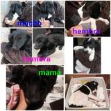 Adopcion Gratuita Cachorritos 3 Meses Y Su Linda Mama