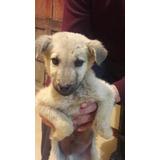 Cachorrito En Adopcion ,fiel Amigo Y Compañía