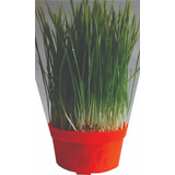 Combo Pasto Gatos Kit 3 Plantas Más Germinada - Solo Bogota