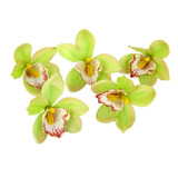 20pcs Flor Artificial Orquídeas Verde Decoración Para Hoga