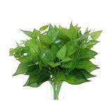 Las Plantas Artificiales Juyo Vonsan 8pcs Epipremnum Aureus