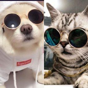 e8318e620aac9 Óculos Para Gato - Laços e Roupas para Cachorros no Mercado Livre Brasil
