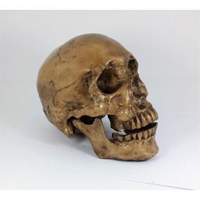 Cráneo Humano De Resina Estudio,decoracion,somos Productores