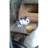 Pdf Conejos