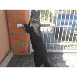 Dosis Anual De Rabia Cachorro Perros