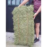 Paca De Heno Jumbo De Alfalfa Para Conejos 25kg Muy Verde