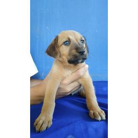 Doação De Uma Filhote De Cachorro Linda
