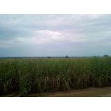 Fazenda Para Venda Em Marilena, Zona Rural - 946