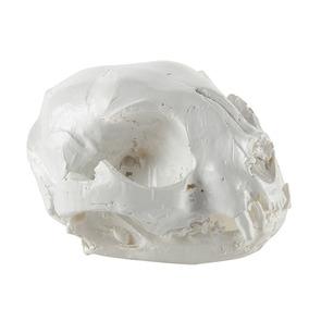 Esculturas De Cabeza Cráneo De Animal Gato Modelo Médico R