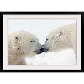 Greatbigcanvas Dos Osos Polares Tocar Las Narices O Besar;