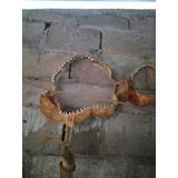 Mandibulas Antiguas De Tiburon