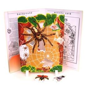 Modelo De Espuma Suave Eta Hand2mind Spider Life Cycle