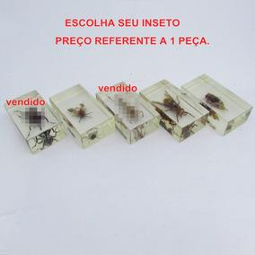 1 Inseto Real Resinado Entomologia Taxidermia Abelha Mosca