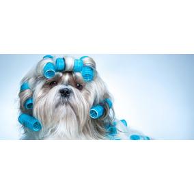 Curso Banho E Tosa Para Cães, Gatos Em 23 Dvds - A61