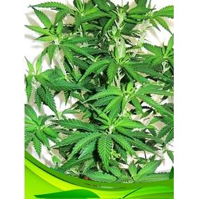 Sustrato Verde Premium Peat Moss Perlita Fibra Coco 50 Lts