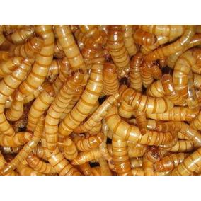 300 Larvas De Tenebrio Molitor