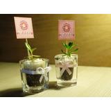 Recuerdos Baby Shower Cactus Y Suculentas Regalos