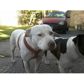 Puros Cachorros Pit