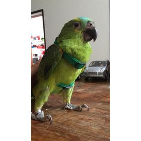 Coleira Para Papagaio - Guia + Peitoral