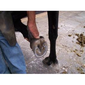 Casqueamento E Correção Dos Aprumos (cavalos Muares) 1 Dvd X