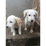Cachorros Adopcion