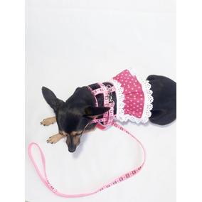 54b068043 Pinscher Para Doacao Gratuito - Guias e Coleiras para Cachorros no ...