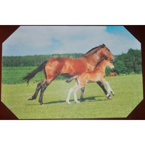 Individual Yegua Y Pony (caballos)