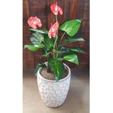 Anthurium Planta Artificial Flores Rojas - Excelente Calidad