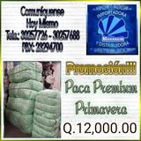 Paca De Ropa Premium