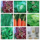 Semillas Huerta Jardin Precio D Cada Variedad D Semillas