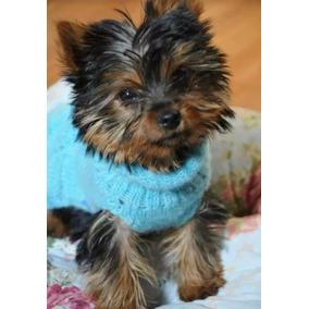 Yorkshire Mini Machos C/ Pedigree Exelentes Cachorros