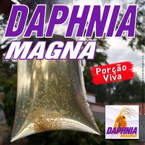 Daphnia Magna Alimento Vivo Porção - Estado De Minas Gerais