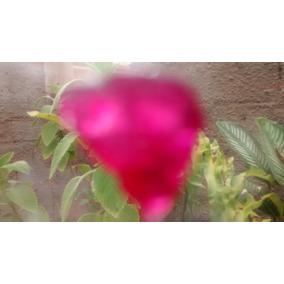 1_ Lindo Rubis Natural Rosado 6,06 Ct
