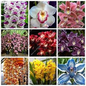 25 Sementes Mix De 22 Cores Raras Orquídeas Cymbidium