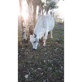 2 Vacas 400 Cada Una