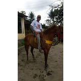 Cavalo Alazão Bacheiro E Bom No Gado