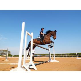 Cavalo Bh Hipismo Brasileiro Salto Equitação