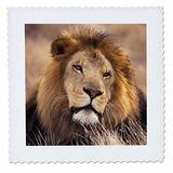 3drose Qs_84670_10 Africa Macho León Africano Panthera Le