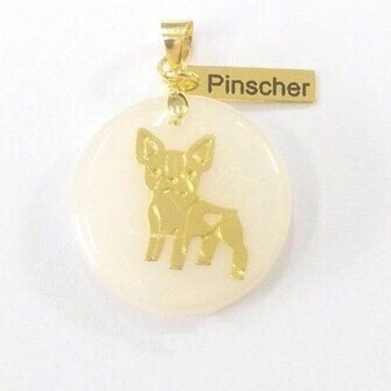 Colar Corrente Pet Pinscher Dog Cachorro Folheada Ouro18k