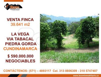 *venta Finca La Vega 39.641 M2
