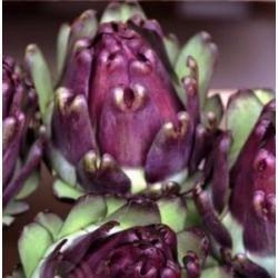 Alcachofra Roxa - 1,2gr De Sementes Culinária Exótica
