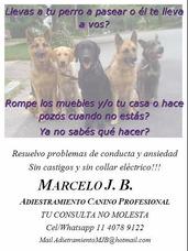 Adiestramiento Canino Profesional Y Traslado De Mascotas
