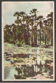 Postal Antigo Carnaubeiras Palmeiras Flora Fortaleza