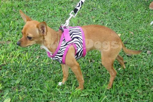 Chaleco Arnes Animal Prin Zebra Talla Xs