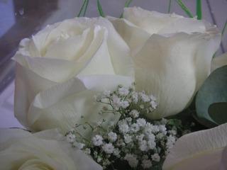 Aceite Bases Aromaticas Semi Naturales Rosa Blanca Las Botic